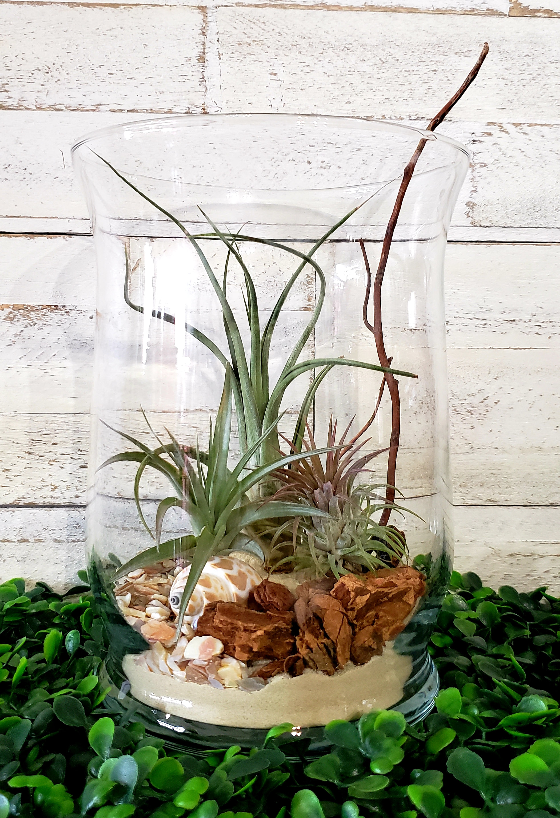 Terrarium Diy Kits Now And Zen Diy Studio